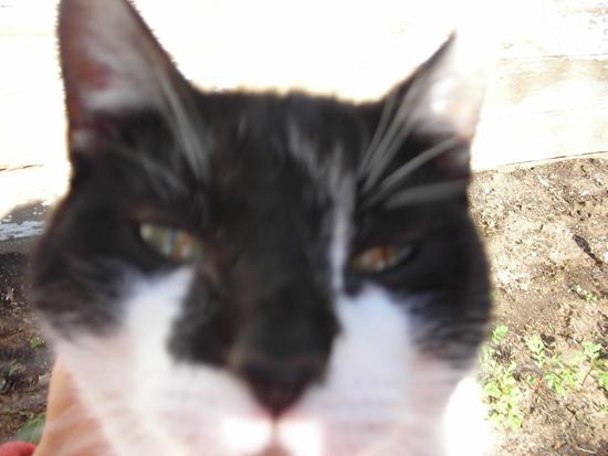 photo hog cat