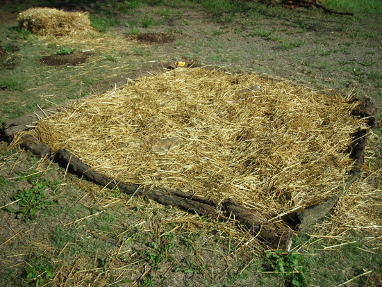 strawberry bed setup with straw mulch