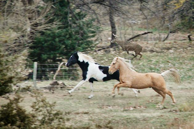 buck antlers running