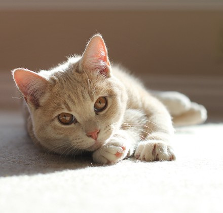 c2blog-kitten-in-sunlight