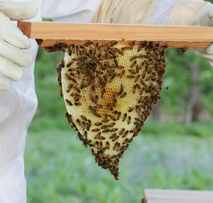 beekeeping-featured