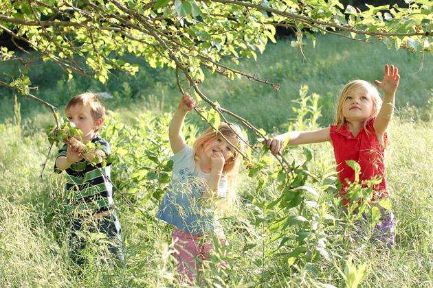 kids picking mulberries